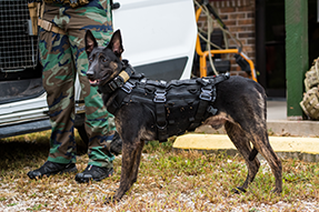 Camera Explosive Detection Dog (CAEDDs)
